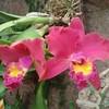 Plante-tropical