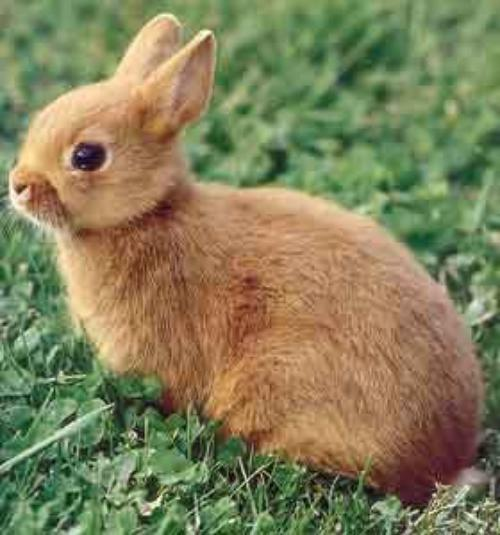Le lapin nain cats dogs rabbit - Photo de lapin mignon ...