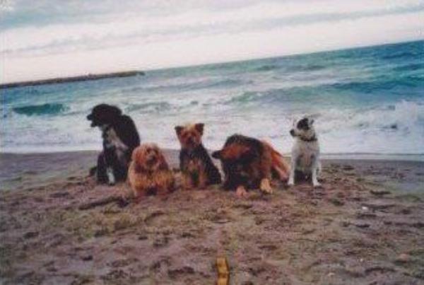 Les chiens en vacances.